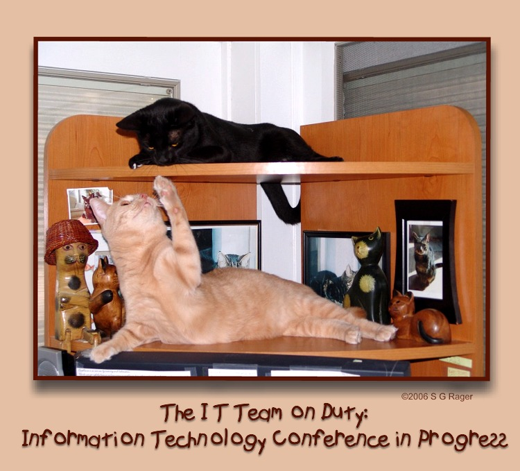 Information Technology Team