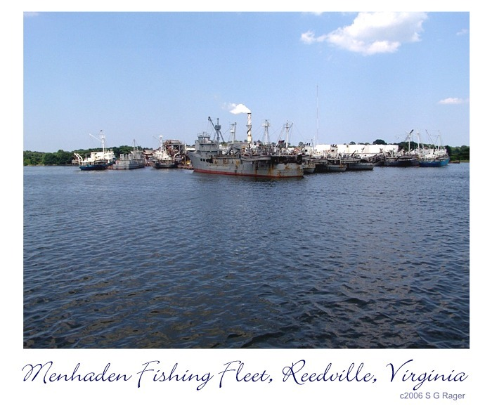 Reedville Fishing Fleet