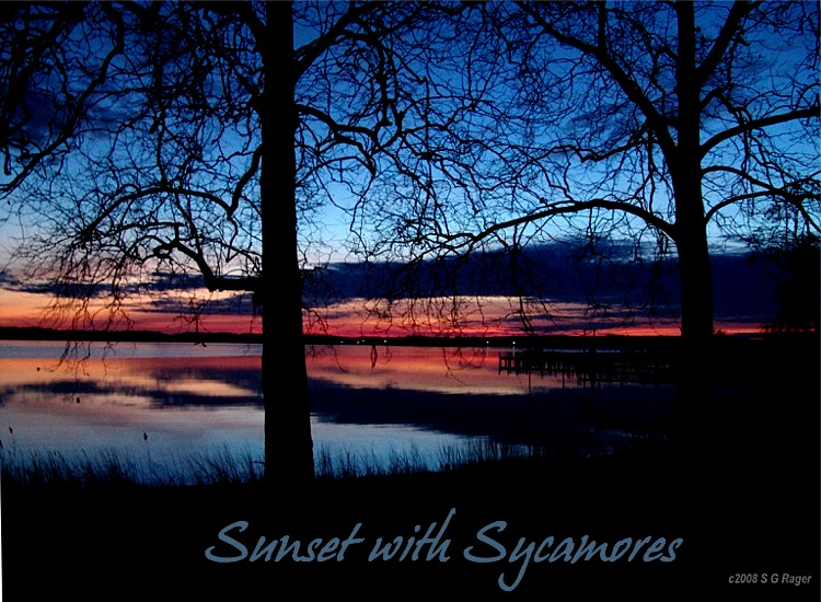 Sunset with Sycamores
