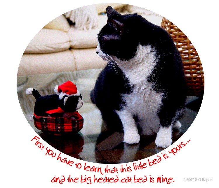 Teaching the Ropes: Christmas Cats