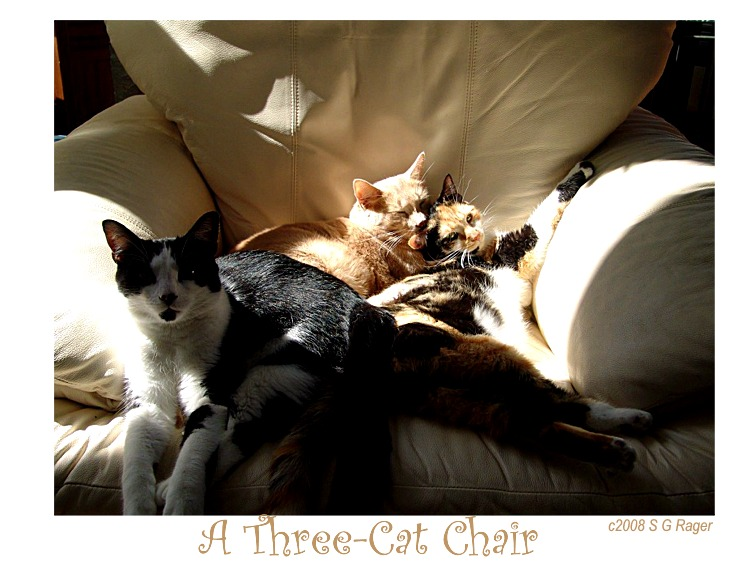 Three Cat Chair