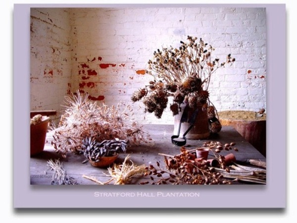Flower Arranging Materials from Stratford Hall
